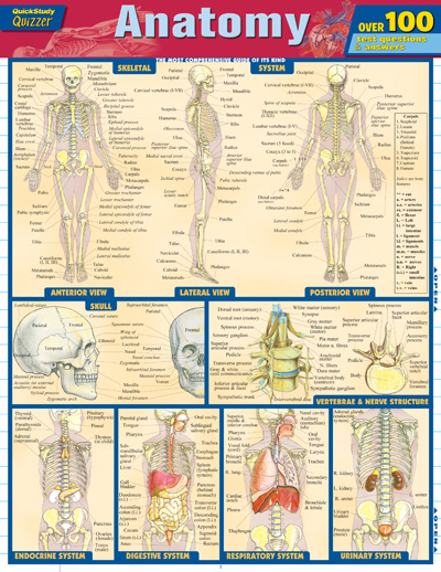 Barcharts Anatomy Quizzer Quick Study Guide