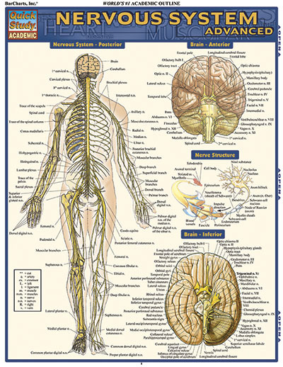 advanced anatomy study guide Start studying anatomy and physiology study guide learn vocabulary, terms,  and more with flashcards, games, and other study tools.
