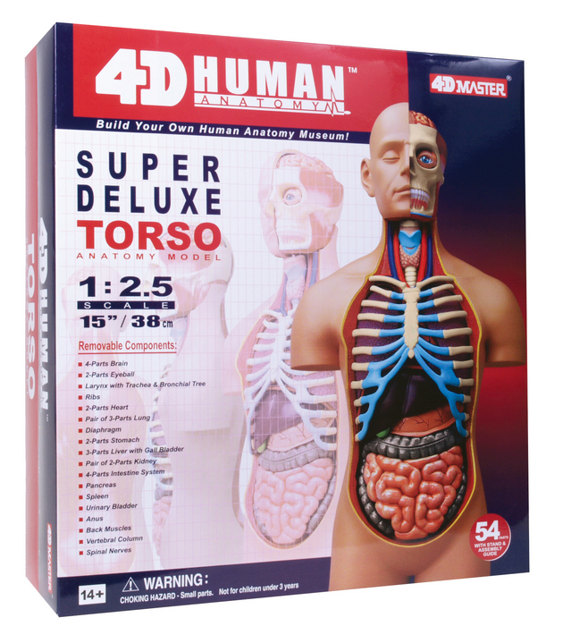 Male Reproductive /& Urinary System HUMAN ANATOMY MODEL,4D Kit # 26063 TEDCO TOYS