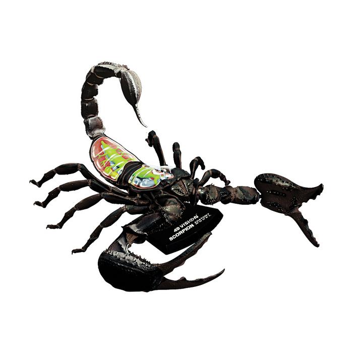 Tedco Toys 4D Vision Scorpion Anatomy Model