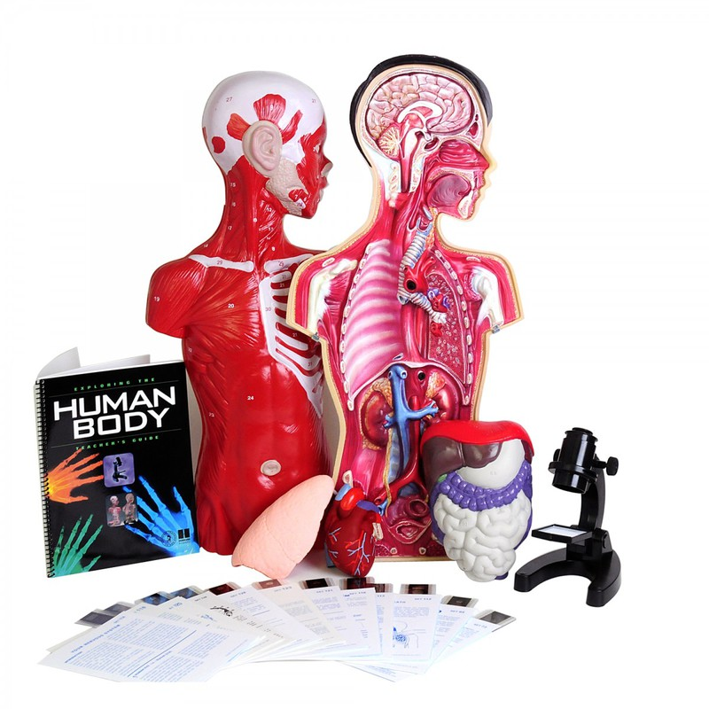 Scott Resources & Hubbard Scientific Exploring the Human Body: Teacher's Guide with Lab Materials