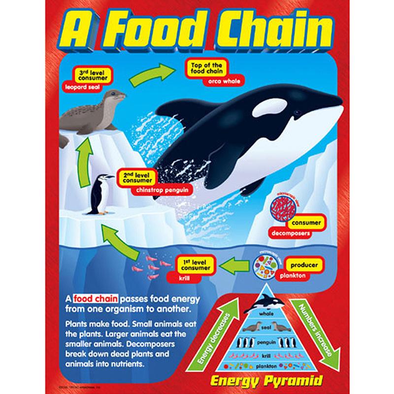 Chart A Food Chain Gr 2-5