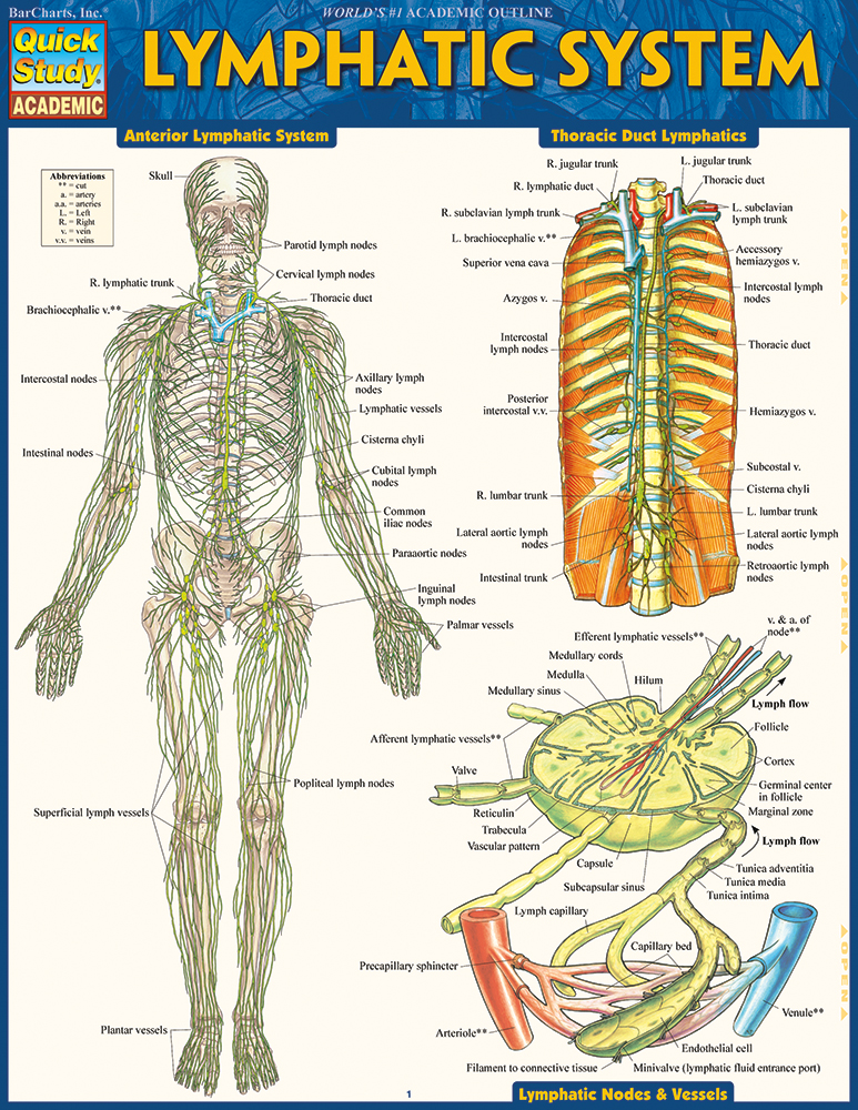 lymphatic system study guide A b lymphatic system: consists of lymphatic vessels and organs: edema: excess fluid accumulating in tissues: lymph: excess tissue fluid: lymphatic vessels: form a one-way system toward the heart.