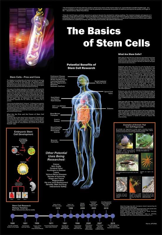 The Basics of Stem Cells Poster: 26