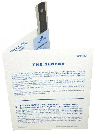 Microslide The Senses: Set of 10 with Box