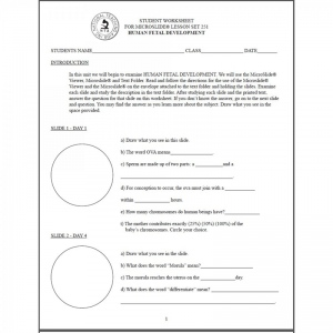 fetal development grade 1 to 12 reproducible student worksheets online teacher supply source. Black Bedroom Furniture Sets. Home Design Ideas