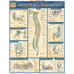 Barcharts Maths Joints & Ligaments: Quick Study Guide
