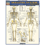 Barchart Skeletal System: Advanced Quick Study Guide