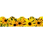 Black Eyed Susans Terrific Trimmers