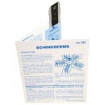 Microslide Echinoderms: Set of 30 with Box