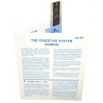 Microslide Digestive System: Set of 15 with Box