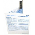 Microslide Flower of a Flowering Plant: Set of 30 with Box