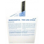 Microslide Marchantia - The Life Cycle: Set of 30 with Box
