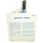 Microslide Ingestion (Amoeba): Set of 10 with Box
