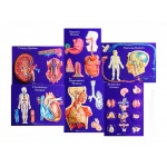 Scott Resources & Hubbard Scientific Master Set of Body Systems: Set of 6