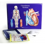 Scott Resources & Hubbard Scientific Circulatory System Model Activity Set