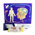 Scott Resources & Hubbard Scientific Nervous System Model Activity Set
