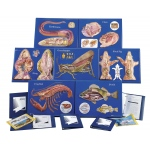 Scott Resources & Hubbard Scientific Master Zoology Model: Set of 7