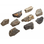 Scott Resources & Hubbard Scientific Plant: Petrified Wood, Pack of 10