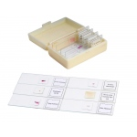 Ginsberg Prepared Glass Microscope Slides: Animal, Set of 10