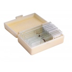 Ginsberg Prepared Glass Microscope Slides: Insects, Set of 10