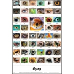 Scott Resources & Hubbard Scientific Eyes Poster