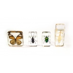 Ginsberg Molded Plastic Specimens: Insects, Set of 4