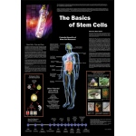 "The Basics of Stem Cells Poster: 26"" x 38"""