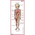 American Education Body-IQ Body Poster