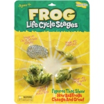Frog Life Cycle Stages