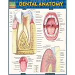 BarCharts Dental Anatomy Quick Study Guide