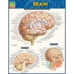 BarCharts Brain Quick Study Guide