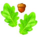 Oak Leaves/acorns Classic Accents Decorations