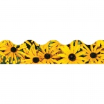 (12 Pk) Black Eyed Susans Terrific Trimmers