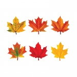 (6 Pk) Classic Accents Maple Leaves Mini Variety Pk-Discovery
