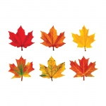 (6 Pk) Classic Accents Maple Leaves Variety Pk-Discovery