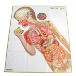 American Educational Do-Body IQ - Nutrition Mat