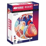 Tedco Science Toys Human Anatomy - Heart Anatomy Model