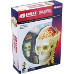 Tedco Science Toys Human Anatomy - Cranial Nerve Skull Anatomy Model