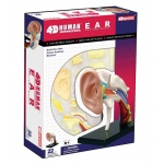 Tedco Science Toys Human Anatomy - Ear Anatomy Model
