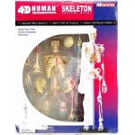 Tedco Science Toys Human Skeleton