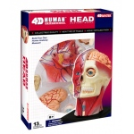 Tedco Science Toys Human Anatomy - Human Head Model