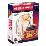Tedco Science Toys Human Anatomy - Human Skin Model