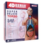 "Tedco Science Toys Human Anatomy - Deluxe Torso Model ""15"""