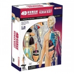 Tedco Science Toys Half Cleared Human Body