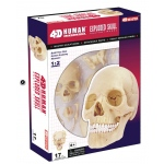 Tedco Science Toys Human Anatomy - Exploded Skull