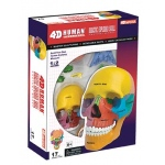 Tedco Science Toys Human Anatomy- Didactic Exploded Skull