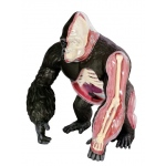 Tedco Science Toys 4D Gorilla Anatomy Model