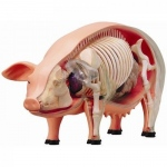 Tedco Science Toys 4D Vision Pig Anatomy Model