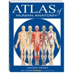BarCharts Atlas Of Human Anatomy